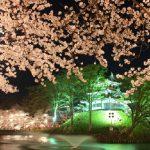 新潟の高田公園で桜の見頃と見所は?花見で屋台!トイレスポットは?