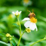 蜜蜂と遠雷のあらすじと読み方は曲を聞くこと!本屋大賞&直木賞受賞!