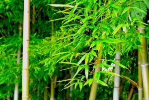 門松の意味3本あるのは松竹梅? 竹