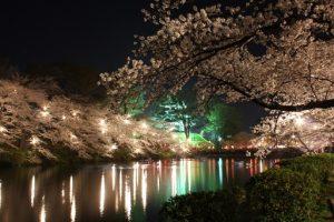 高田公園で花見時期の駐車場の混雑状況は?
