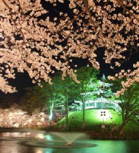 新潟の高田公園で桜の見頃と見所は?