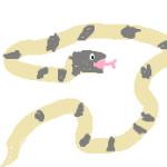 シロマダラヘビの販売価格や毒はあるのか?飼育方法ってどうやる!