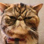 チェシャ猫のメイク方法と簡単なやり方!ハロウィンはこれで行け!