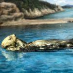 マリンピア日本海の見どころはラッコと淡水魚!【画像アリ】