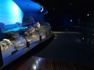 新潟市水族館マリンピア日本海!!!凄え