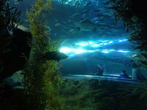 マリンピア日本海の水中トンネル