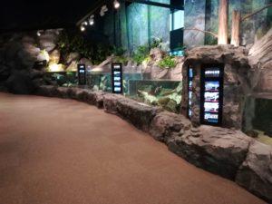 マリンピア日本海の淡水魚は世界一!
