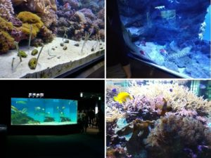 マリンピア日本海の魚達